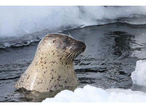 【北海道・札幌発着】流氷砕氷船『ガリンコ号II』サンセットクルーズと旭山動物園日帰り