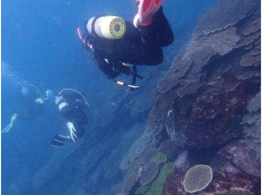 【和歌山・白浜】ライセンス不要!未経験者も歓迎!海で体験ダイビングコース【一年中開催】