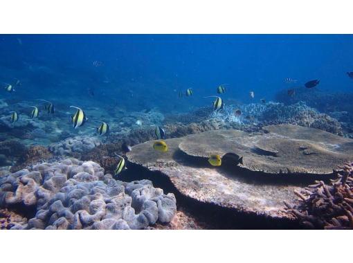 送迎あり☆宜野湾ビーチエントリー【体験ダイビング・魚に餌付け・写真データプレゼント】