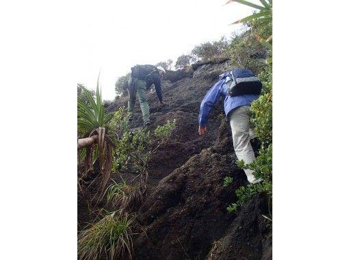 【半日森山歩きツアー】小笠原の自然を気軽に満喫!のんびり山歩き体験(半日コース)