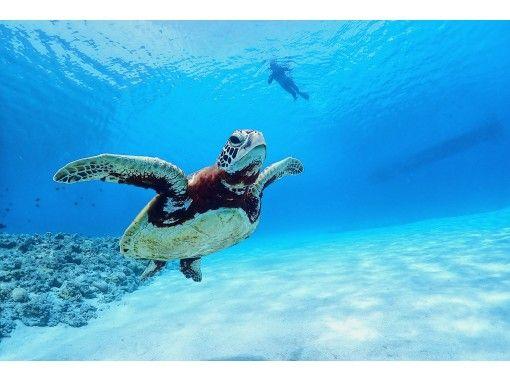 【沖縄・本島中部】大人気!!ニモもいる幻想的な海の世界で体験ダイビング★ボートでしか行けない特別なポイントにご案内の紹介画像