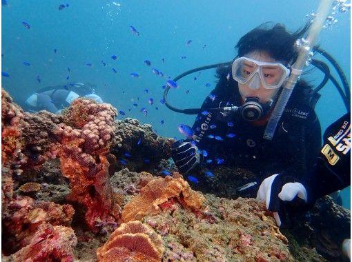 【四国・徳島】初心者歓迎☆ 秋のダイビングベストシーズン!熱帯魚の楽園ぽっこり小島で体験ダイビング