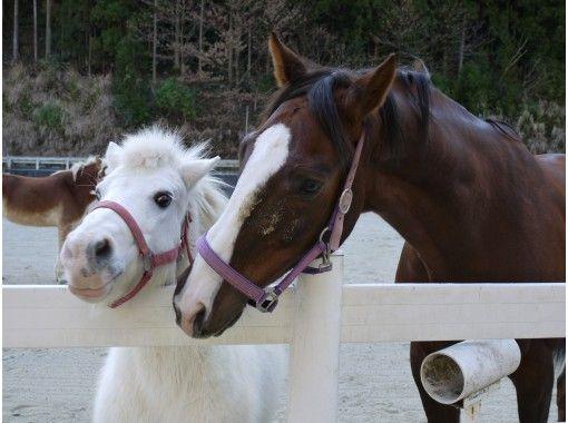 【徳島県・那賀町】お子様ご参加OK!大自然の中で家族そろって観光乗馬体験