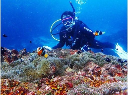【静岡・伊東】期間限定 今だけ8,800円税込 はじめての体験ダイビング