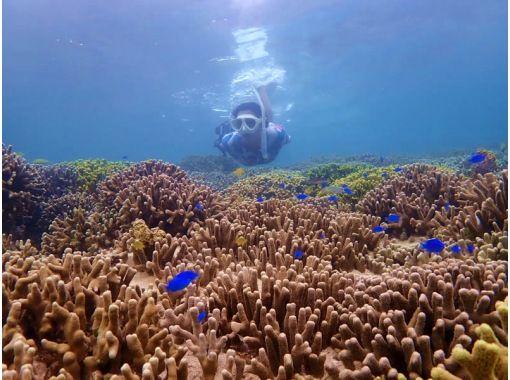 地域共通クーポンOK【沖縄・石垣島】冬でも泳ぎたい!サンゴの森へビーチシュノーケリング
