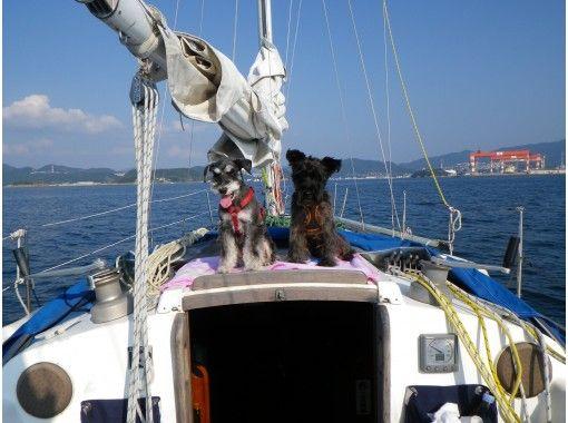 【Beppu】Enjoy Sailing, Onsen, local delicacy w/ us!