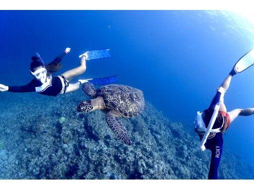 [沖縄石垣島]深潛!半天課程(上午/下午),附有水下照片禮物!の紹介画像