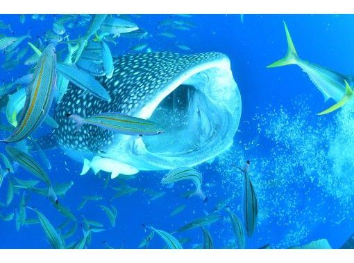 免费照片和视频! |鲸鲨和体验潜水|初学者OK!の紹介画像