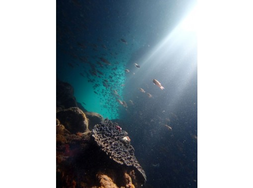 【熊本・天草】青の洞窟うしぶか ボートからのシュノーケリングツアー
