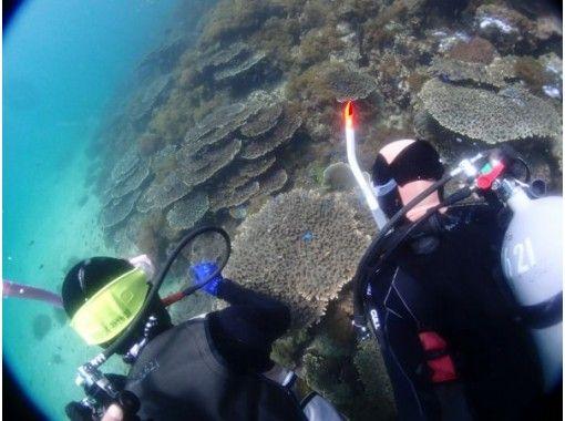 【熊本・天草】ボートで行く体験ダイビング 珊瑚と熱帯魚が生息する うしぶか海中公園コース