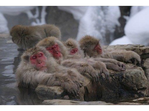 東京的壽喜燒午餐與雪猴之旅の紹介画像