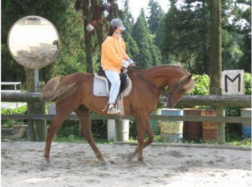 【愛知・瀬戸】初心者・初めての方歓迎!体験乗馬プラン