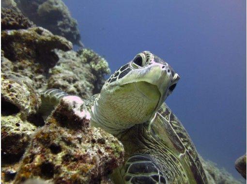 【沖縄・宮古島】ちょっとした時間にウミガメ狙い!?ビーチシュノーケリング!!の紹介画像