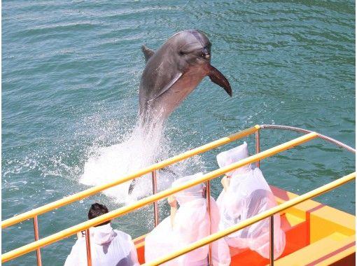 【静岡・伊豆下田】イルカやアシカのショーを毎日開催、お子様もOKなイルカと遊べるプログラムも大人気!下田水族館  お得な割引チケット!