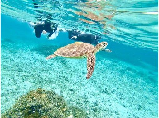 奄美ブルーの海で海ガメと泳ごう‼️高確率で逢える・海ガメ探索ュノーケル ※5歳からご参加頂けます。お子様大歓迎❗️