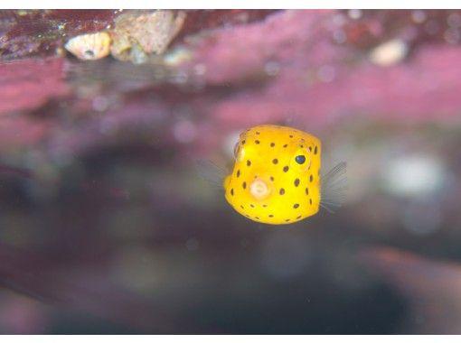 【愛媛・愛南】まるで南国!カラフルな魚や綺麗なサンゴに囲まれて「体験ダイビング」