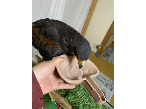 猛禽類飼育体験
