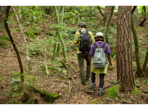 [Yamagata Prefecture, Iide-machi] Forest walking and gastronomy plan to eat wild plants and tree buds / Wild vegetable picking master and cook accompanying plan / Cooking on the spot!の紹介画像