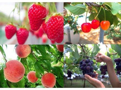 自助午餐享用富士山美景和時令水果の紹介画像