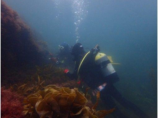 【千葉・勝浦】勝浦ダイビング2ビーチ!マイペースでゆったり~潜り込む程に楽しさもアップ~