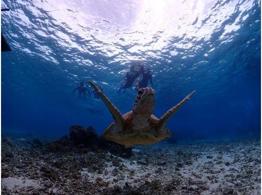 【沖縄・宮古島】【サンゴ・ウミガメ:少人数制】シュノーケリングツアー(開催期間4/29~10/31)