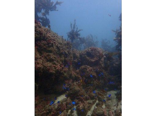 【千葉・勝浦】勝浦ダイビングライセンス取得コース!~憧れのダイバーになって海を潜ろう~