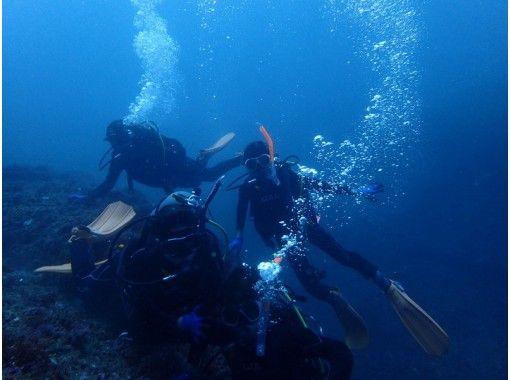 【千葉・勝浦】行川ダイビング2プチボート(湾内)!マイペースでゆったり生物ウォッチング~