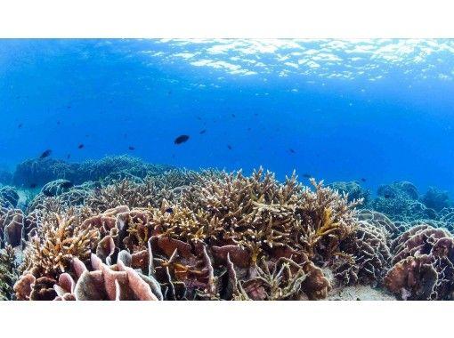 海に潜った気分になれる癒しの鹿児島本土の海中オンライン体験
