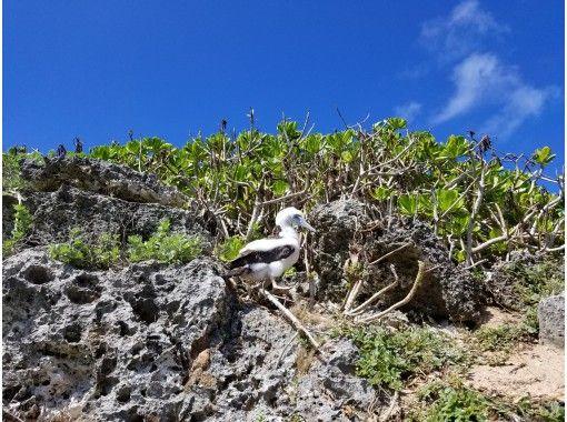 【南島上陸半日ツアー】小笠原イチの絶景!東洋のガラパゴス・南島に上陸