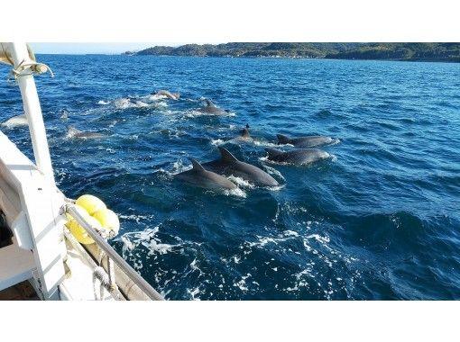 【熊本・天草市】野生のイルカに会いに行こう! 約200頭のミナミハンドウイルカの群れに季節を問わず会えます!