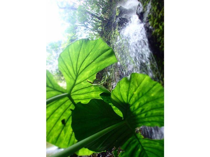 【鹿児島・奄美大島】大地・森からの癒し(半日プラン)の紹介画像