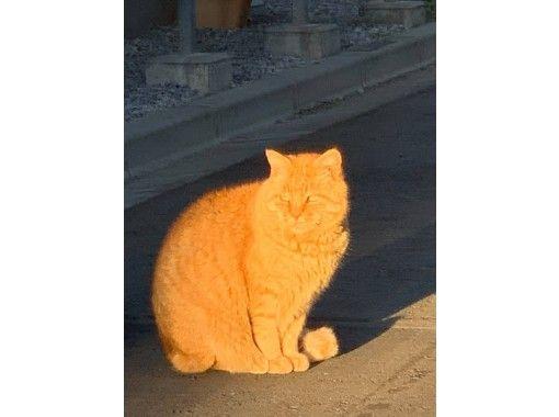[Tokyo Yanaka] Photo walk Shitamachi gourmet + cat + cat goods exploration Group charter OK ♪ for your favorite plan ♪の紹介画像
