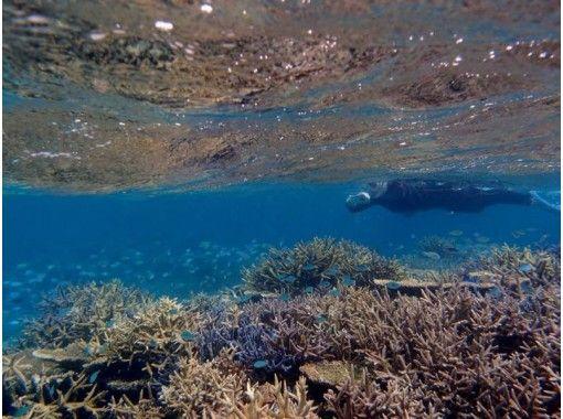 【沖縄・石垣島】地域共通クーポン使用可!お魚やサンゴに囲まれながらスキンダイビングを楽しむ!半日(AM・PM)☆ガイドと一緒に海へ♪器材込み