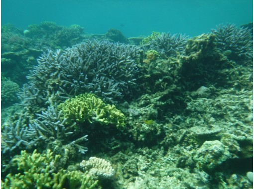 [Okinawa / Miyakojima] Use regional Use a coupon Miyakojima Ogami Island Coral Reef Boat Snorkeling half-day course! Even beginners are welcome and safe! Equipment disinfected!の紹介画像