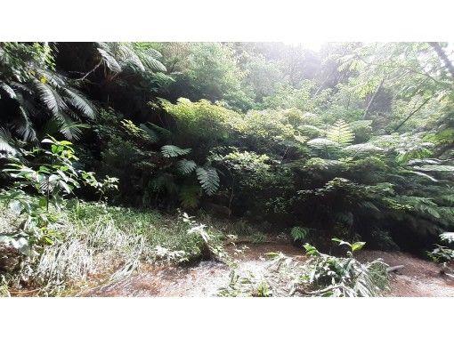 【沖縄・恩納村】亜熱帯植物が生い茂る森へ森林浴+トレッキング
