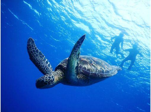 笑顔割引キャンペーン実施中【沖縄・石垣島】青の洞窟探検&ウミガメシュノーケル(送迎付き)***コロナウィルス感染防止対策実施中***の紹介画像