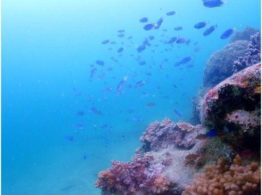 【四国・徳島】無人島シュノーケリング☆熱帯魚の楽園で海を満喫!お一人でも♪お友達やグループでも♪ご家族でも楽しめる!