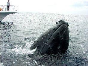 ジョイクリエイト沖縄ティーダの画像
