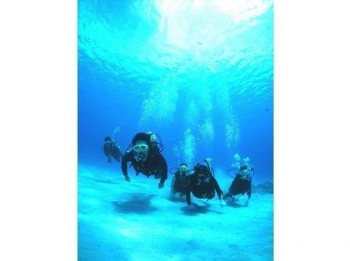 【慶良間諸島・3か所周遊★水中写真無料】体験ダイビング&スノーケリング+1月~3月ホエールサービス