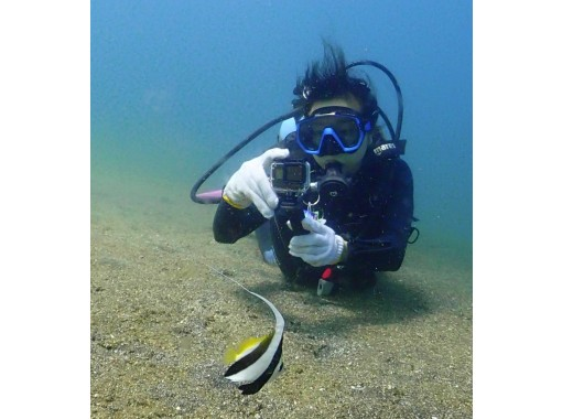 【千葉県・南房総】海の中は竜宮城(初めての方でも安心体験ダイビング・クマノミに会える)■記念写真付