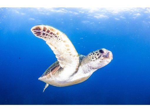 【和歌山・串本】1名様からご参加可能!!串本の海を堪能しよう!!2ボートダイビング!昼食付き