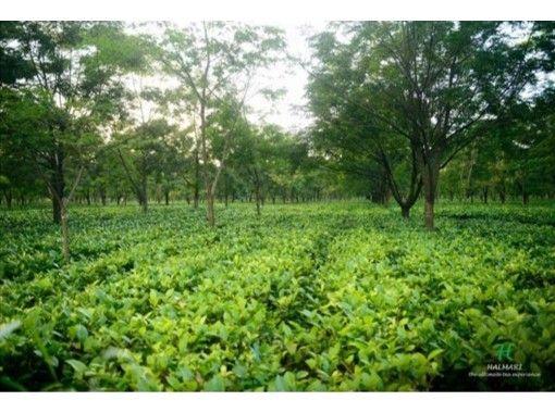 【オンライン】紅茶の達人Vasant(ワサント氏)によるインド紅茶セミナー /プライベート / オンラインショッピング