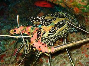 クラブノア母島の画像