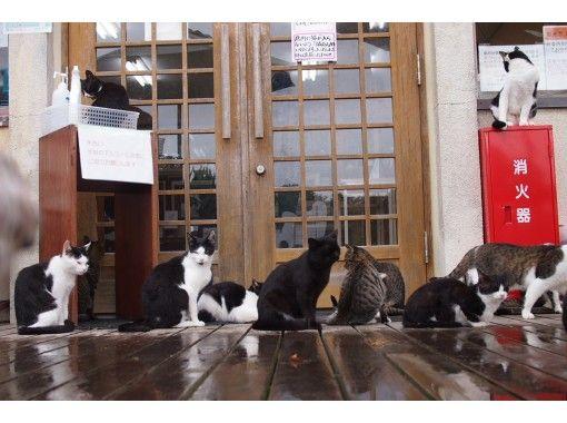 【オンライン】猫好きのための、猫好きによる、宮城「田代島」ぷらり旅/人より猫が多い猫島を散歩しよう!