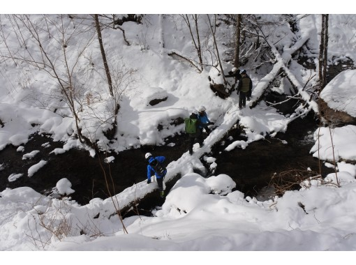 [Lake Shikotsu, Hokkaido] Let's ride a fat bike and run through a snowy forest road! (December to early March)の紹介画像