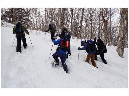 [Hokkaido, Otaru] Snowshoe hiking with a professional guide in Shioya Maruyama <Beginner OK, with lecture>の紹介画像