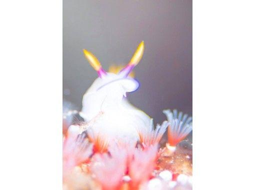 《GoToトラベル地域共通クーポン対応》ウミウシダイビング(1ダイブ)/到着日ダイビング/那覇市内送迎/器材レンタル込み/ひとり参加OK/の紹介画像