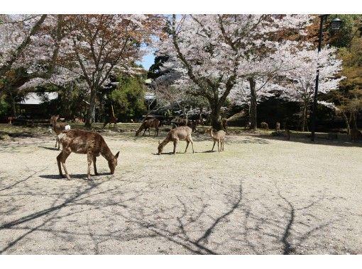 【広島・広島市】とのさまご散策クルーズ「広島⇔宮島」の紹介画像