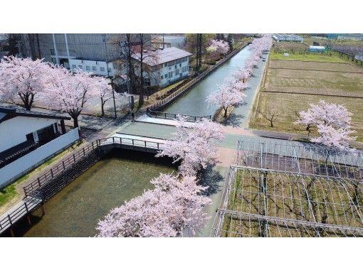 【山形・寒河江】春だ!桜だ!オープニングキャンペーン!季節限定!地元ガイドが案内!クロスバイクで行く寒河江・桜巡りツアーの紹介画像