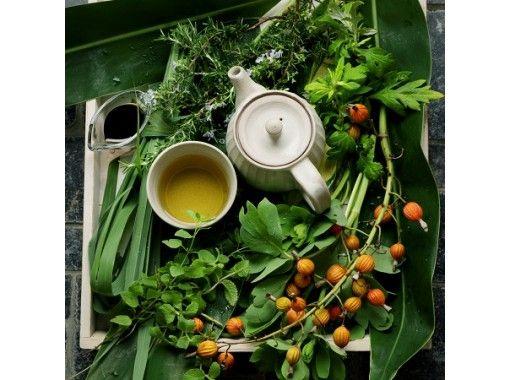 [在线体验]生姜凉茶和自制海岛草药从体内热身!冲绳石垣岛在线体验之旅の紹介画像